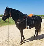 Christine Tomlin {Mounted Archery/Trails}