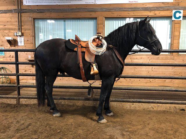 Bailey Nickel {Western Pleasure/General Ranching}